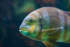 Tropical fish. Vienna Zoo. Austria Stock Image