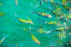 Tropical Fish in water Stock Photos