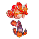 Tropical fish on a white background. Clown isolated. Illustration for your design and work. Watercolor Stock Image