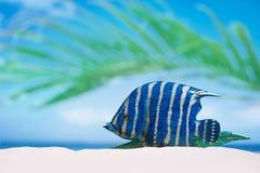 Tropical fish on white sand beach sand under sun light, Stock Photo