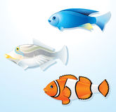 Tropical Fishes Royalty Free Stock Photo