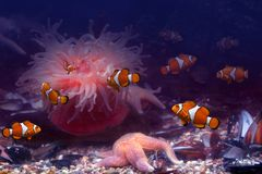 Tropical fishes. It is very colourful photo of the underwater world and  its inhabitants - exotic fishes Stock Photography