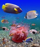Tropical fishes. It is very colourful photo of the underwater world and  its inhabitants - exotic fishes. Each fish possesses bright coloring Royalty Free Stock Images
