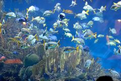 Tropical fishes Stock Images