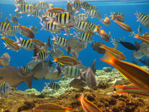 Tropical fishes  Stock Photos