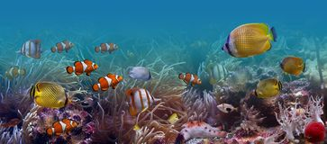 Tropical fishes. It is very colourful photo of the underwater world and  its inhabitants - exotic fishes. Each fish possesses bright coloring Stock Photography