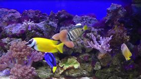 Tropical fishes at  aquarium, Czech Republic stock footage
