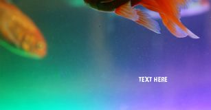 Tropical fishes background, underwater photos. Royalty Free Stock Photos