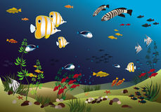Tropical fishes bottom of the ocean. Vector illustration Stock Images