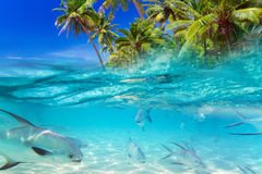 Tropical fishes of Caribbean Sea. Tropical fishes in the water of Caribbean Sea Royalty Free Stock Photo