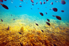 Tropical fishes at coral reef area Stock Image