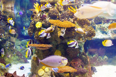 Tropical fishes at coral reef area Stock Photos
