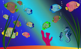 Tropical fishes Stock Photography