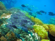 Tropical fishes аnd corals.Indian ocean. Stock Photo