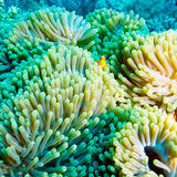 Tropical Fishes near Colorful Coral Reef Stock Photo