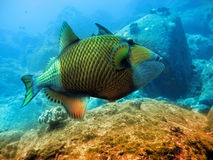 Tropical fishes over a coral reef.Close up in a sunny day Royalty Free Stock Photo