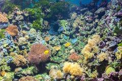 Tropical fishes at Rayong aquarium Thailand Royalty Free Stock Photo