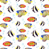 Tropical fishes. Repeating seamless pattern. Watercolor Stock Photo