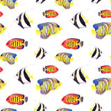 Tropical fishes. Repeating seamless pattern. Watercolor Stock Images