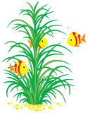 Tropical fishes and seaweed Royalty Free Stock Photos