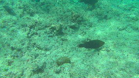 Tropical fishes, Similan Islands. Tropical underwater world, Similan Islands Thailand stock footage