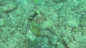 Tropical fishes, Similan Islands stock footage