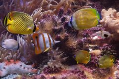 Tropical fishes and starfish Stock Photos