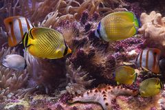 Tropical fishes and starfish Royalty Free Stock Photos