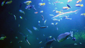 Tropical fishes. Swimming around stock video footage