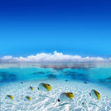 Tropical Fishes in Tahiti Stock Photos