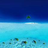 Tropical Fishes in Tahiti Stock Photography