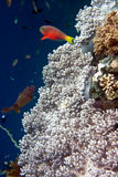 Tropical fishes. Underwater world. Royalty Free Stock Photography