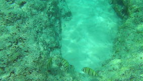 Tropical fishes. Tropical underwater world, Similan Islands Thailand stock video