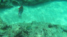 Tropical fishes. Tropical underwater world. Similan Islands Thailand stock footage