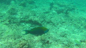 Tropical fishes. Tropical underwater world, Similan Islands Thailand stock footage