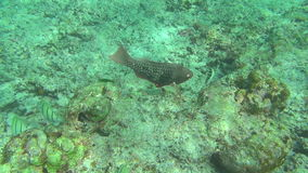 Tropical fishes underwater. Tropical underwater world, Similan Islands Thailand stock video