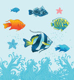 Tropical fishes. Vecror set. Royalty Free Stock Photography