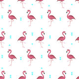 Tropical flamingos. Flamingo seamless pattern. Background with tropical flamingos Royalty Free Stock Image