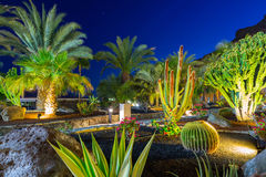 Tropical flora of Gran Canaria Stock Photo