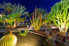 Tropical flora of Gran Canaria Royalty Free Stock Photo