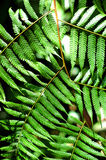 Tropical flora. Tropical leaves in the sun Stock Images