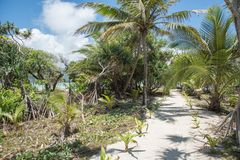 Tropical Flora Path: Mystery Island. Mangrove forest, palm trees and sandy path to remote Pacific Ocean beach on a sunny day at Mystery Island, Vanuatu Stock Photos