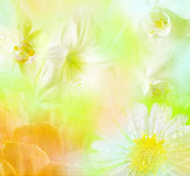 Tropical floral background stock photos