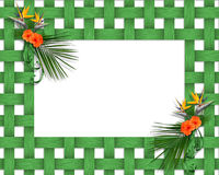Tropical floral Frame Stock Photography