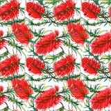 Tropical floral pattern with red exotic flowers callistemon Royalty Free Stock Photo