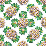 Tropical floral pattern. Watercolor flowers plumeria. White exotic flower frangipani repeating backdrop. vector illustration
