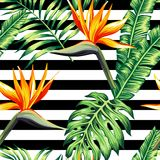 Tropical floral seamless background Royalty Free Stock Photo