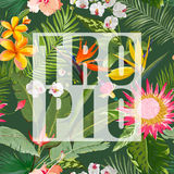 Tropical Floral Summer Graphic. For Wallpapers, Backgrounds, Textures, Textile, Cards. Stock Photos
