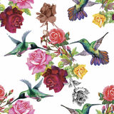 Tropical floral watercolor seamless pattern with colibris and flowers. Watercolor painting. Stock Photos