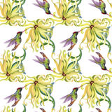 Tropical floral watercolor seamless pattern with colibris and flowers. Watercolor painting. Stock Image